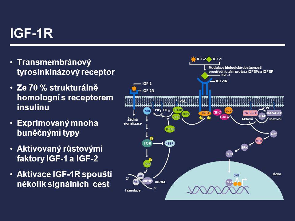 IGF-1R Transmembránový tyrosinkinázový receptor Ze 70 % strukturálně homologní s receptorem insulinu Exprimovaný mnoha buněčnými typy Aktivovaný růsto