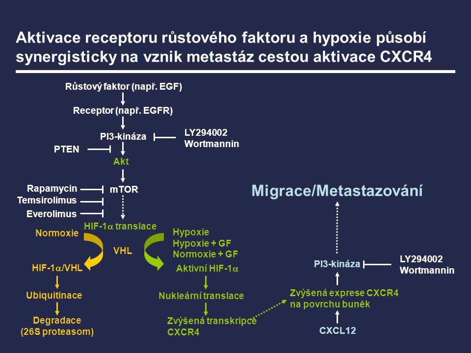 VHL Normoxie HIF-1  /VHL Ubiquitinace Degradace (26S proteasom) Aktivní HIF-1  Nukleární translace Zvýšená transkripce CXCR4 Hypoxie Hypoxie + GF No