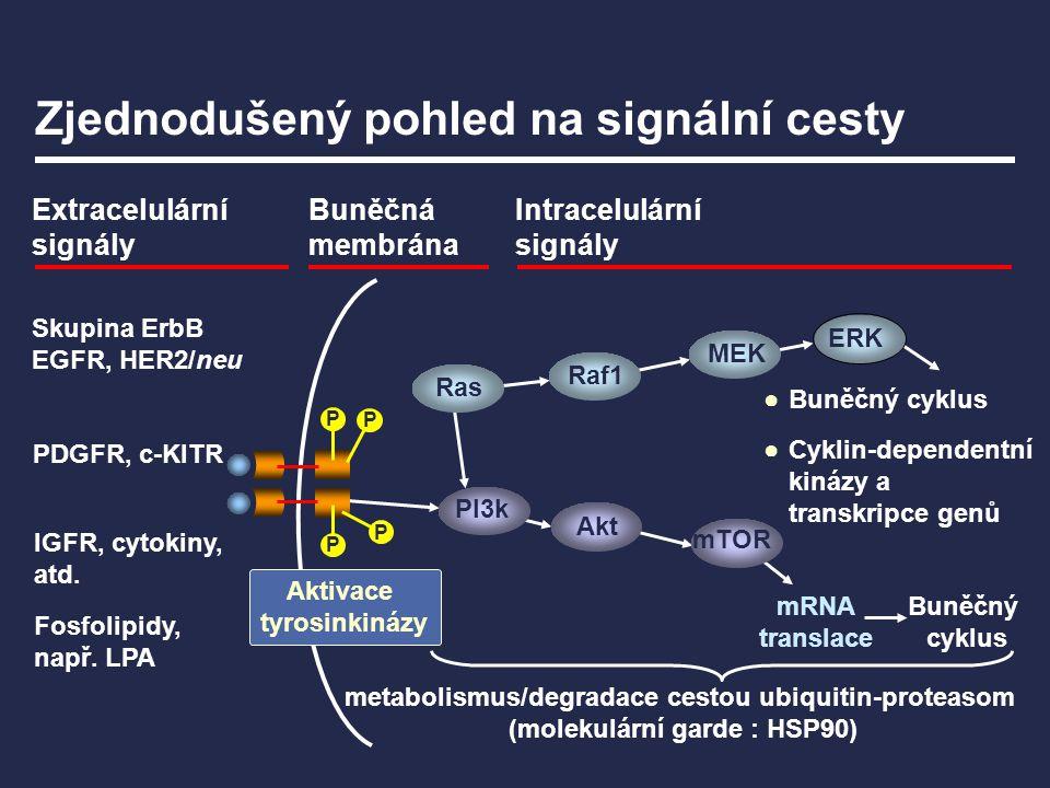 mRNA translace Zjednodušený pohled na signální cesty Extracelulární signály Buněčná membrána Intracelulární signály Skupina ErbB EGFR, HER2/neu IGFR,