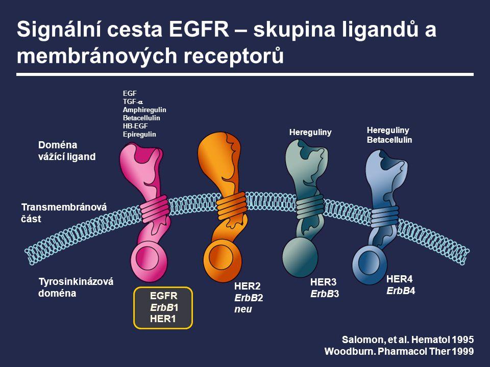 Signální cesta EGFR – skupina ligandů a membránových receptorů EGFR ErbB1 HER1 HER2 ErbB2 neu HER3 ErbB3 HER4 ErbB4 Doména vážící ligand Transmembráno