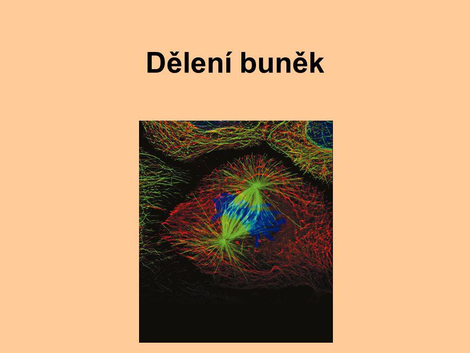 Dělení buněk