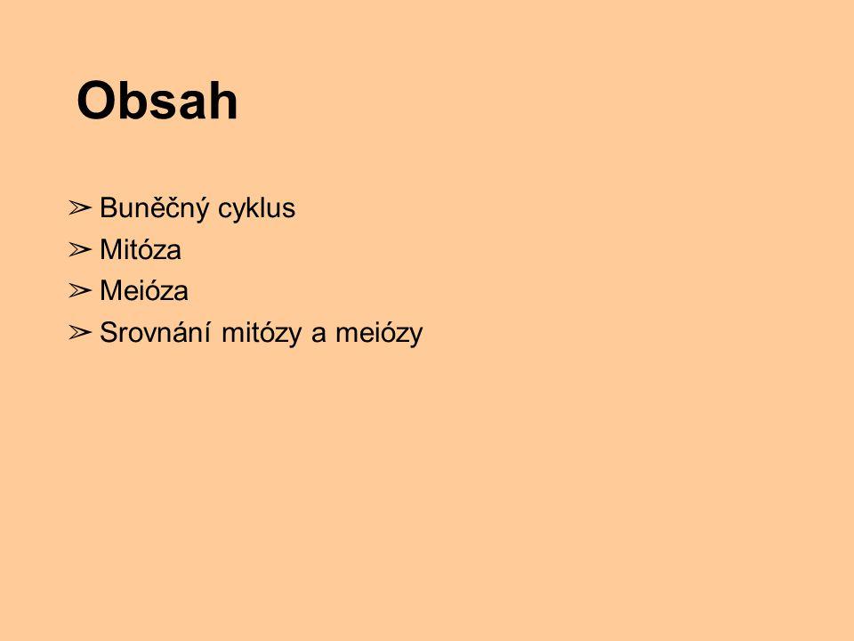 Obsah ➢ Buněčný cyklus ➢ Mitóza ➢ Meióza ➢ Srovnání mitózy a meiózy