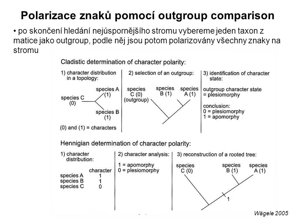 Polarizace znaků pomocí outgroup comparison Wägele 2005 po skončení hledání nejúspornějšího stromu vybereme jeden taxon z matice jako outgroup, podle něj jsou potom polarizovány všechny znaky na stromu