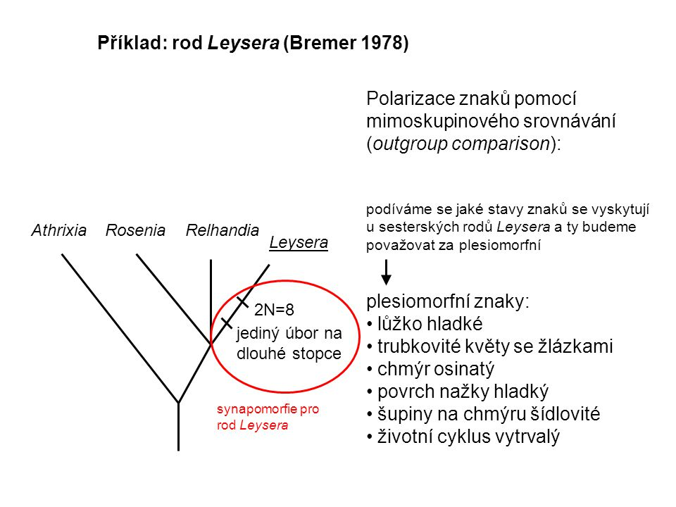 Příklad: rod Leysera (Bremer 1978) AthrixiaRoseniaRelhandia Leysera 2N=8 jediný úbor na dlouhé stopce Polarizace znaků pomocí mimoskupinového srovnávání (outgroup comparison): podíváme se jaké stavy znaků se vyskytují u sesterských rodů Leysera a ty budeme považovat za plesiomorfní plesiomorfní znaky: lůžko hladké trubkovité květy se žlázkami chmýr osinatý povrch nažky hladký šupiny na chmýru šídlovité životní cyklus vytrvalý synapomorfie pro rod Leysera