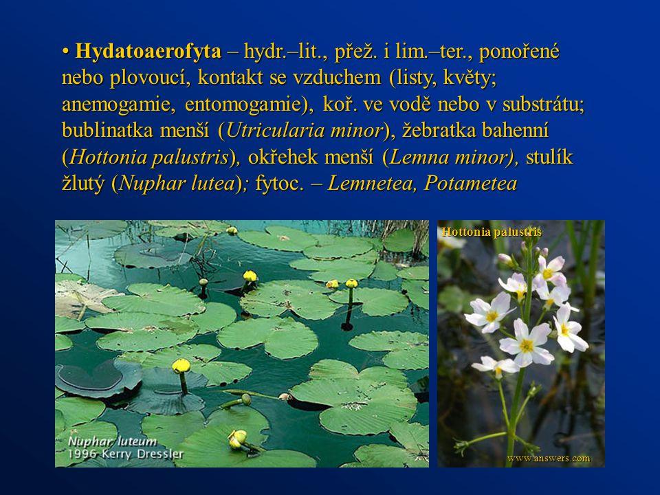 Hydatoaerofyta – hydr.–lit., přež. i lim.–ter., ponořené nebo plovoucí, kontakt se vzduchem (listy, květy; anemogamie, entomogamie), koř. ve vodě nebo