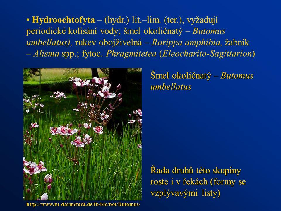 Hydroochtofyta – (hydr.) lit.–lim. (ter.), vyžadují periodické kolísání vody; šmel okoličnatý – Butomus umbellatus), rukev obojživelná – Rorippa amphi