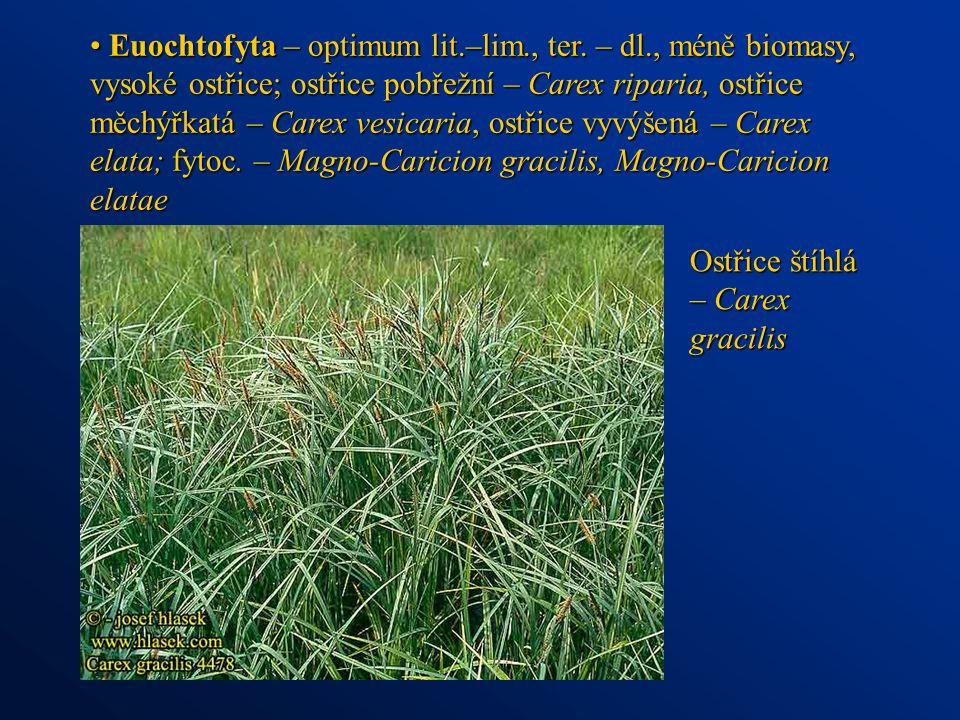 Euochtofyta – optimum lit.–lim., ter. – dl., méně biomasy, vysoké ostřice; ostřice pobřežní – Carex riparia, ostřice měchýřkatá – Carex vesicaria, ost