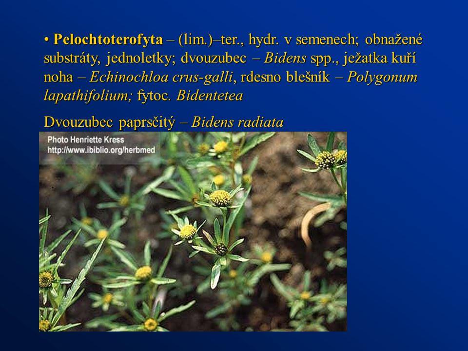 Pelochtoterofyta – (lim.)–ter., hydr. v semenech; obnažené substráty, jednoletky; dvouzubec – Bidens spp., ježatka kuří noha – Echinochloa crus-galli,