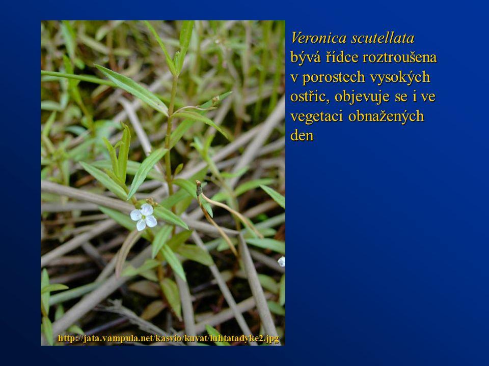 Veronica scutellata bývá řídce roztroušena v porostech vysokých ostřic, objevuje se i ve vegetaci obnažených den http://jata.vampula.net/kasvio/kuvat/luhtatadyke2.jpg