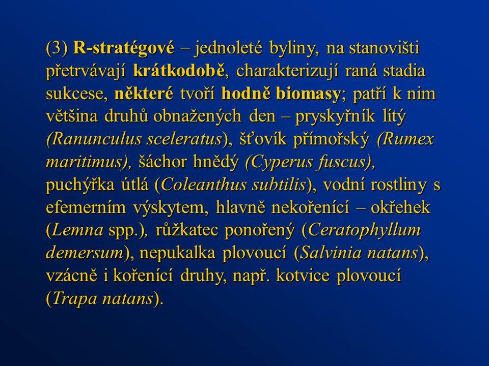 (3) R-stratégové – jednoleté byliny, na stanovišti přetrvávají krátkodobě, charakterizují raná stadia sukcese, některé tvoří hodně biomasy; patří k nim většina druhů obnažených den – pryskyřník lítý (Ranunculus sceleratus), šťovík přímořský (Rumex maritimus), šáchor hnědý (Cyperus fuscus), puchýřka útlá (Coleanthus subtilis), vodní rostliny s efemerním výskytem, hlavně nekořenící – okřehek (Lemna spp.), růžkatec ponořený (Ceratophyllum demersum), nepukalka plovoucí (Salvinia natans), vzácně i kořenící druhy, např.