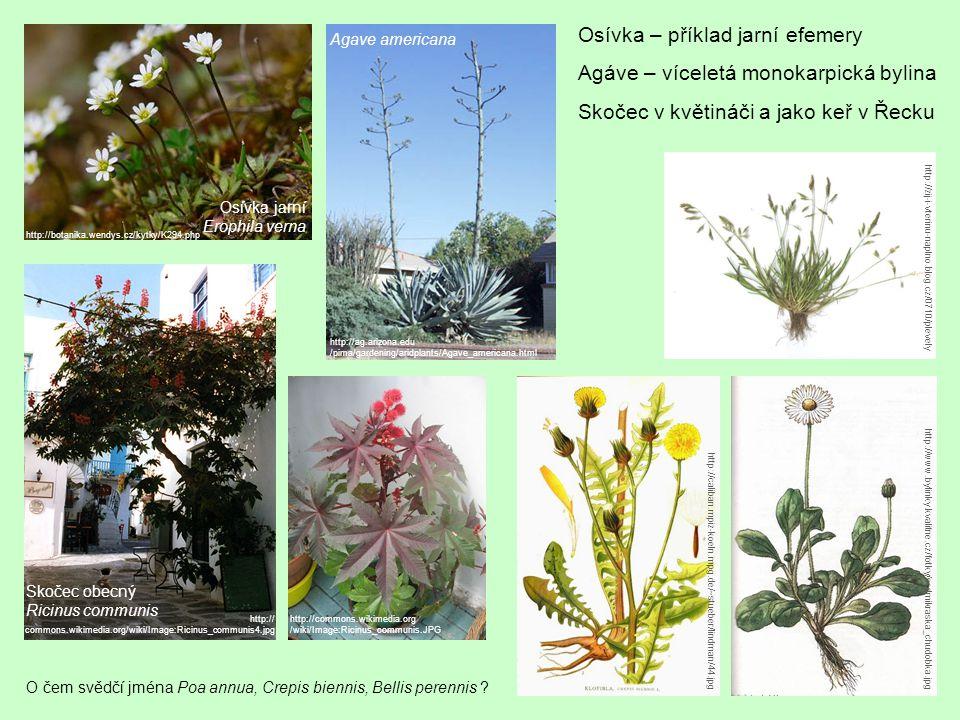 O čem svědčí jména Poa annua, Crepis biennis, Bellis perennis .