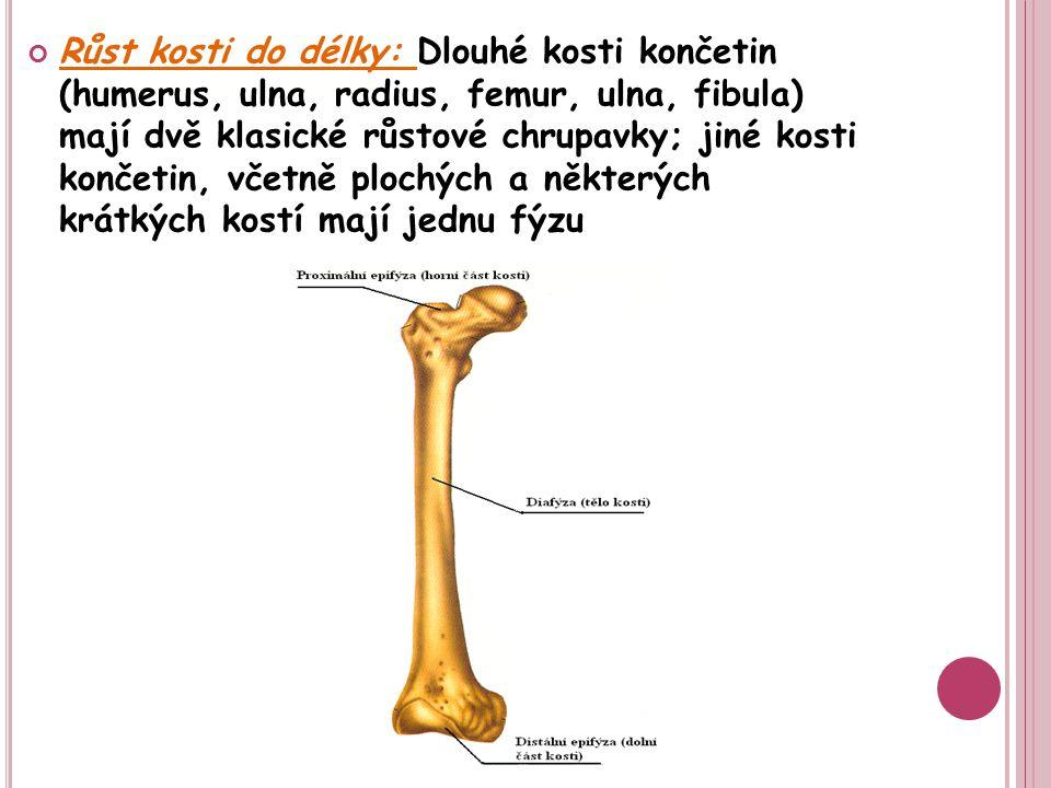 Růst kosti do délky: Dlouhé kosti končetin (humerus, ulna, radius, femur, ulna, fibula) mají dvě klasické růstové chrupavky; jiné kosti končetin, včetně plochých a některých krátkých kostí mají jednu fýzu