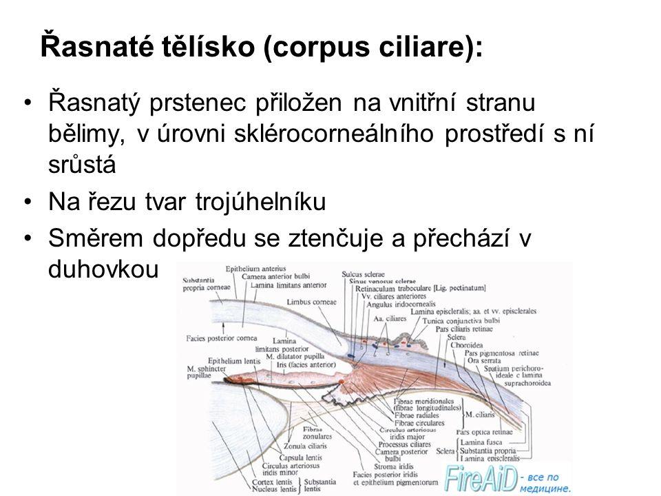 Řasnaté tělísko (corpus ciliare): Řasnatý prstenec přiložen na vnitřní stranu bělimy, v úrovni sklérocorneálního prostředí s ní srůstá Na řezu tvar tr