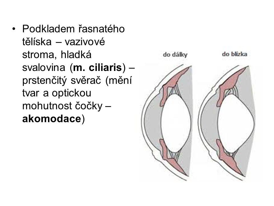 Podkladem řasnatého tělíska – vazivové stroma, hladká svalovina (m. ciliaris) – prstenčitý svěrač (mění tvar a optickou mohutnost čočky – akomodace)