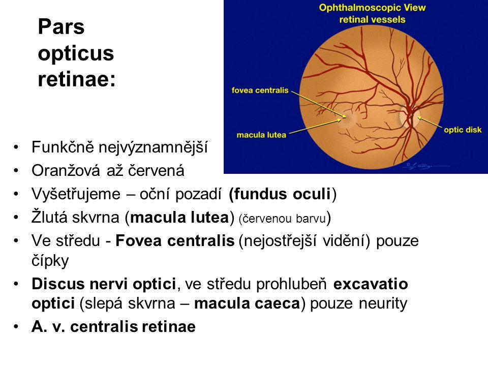 Pars opticus retinae: Funkčně nejvýznamnější Oranžová až červená Vyšetřujeme – oční pozadí (fundus oculi) Žlutá skvrna (macula lutea) (červenou barvu