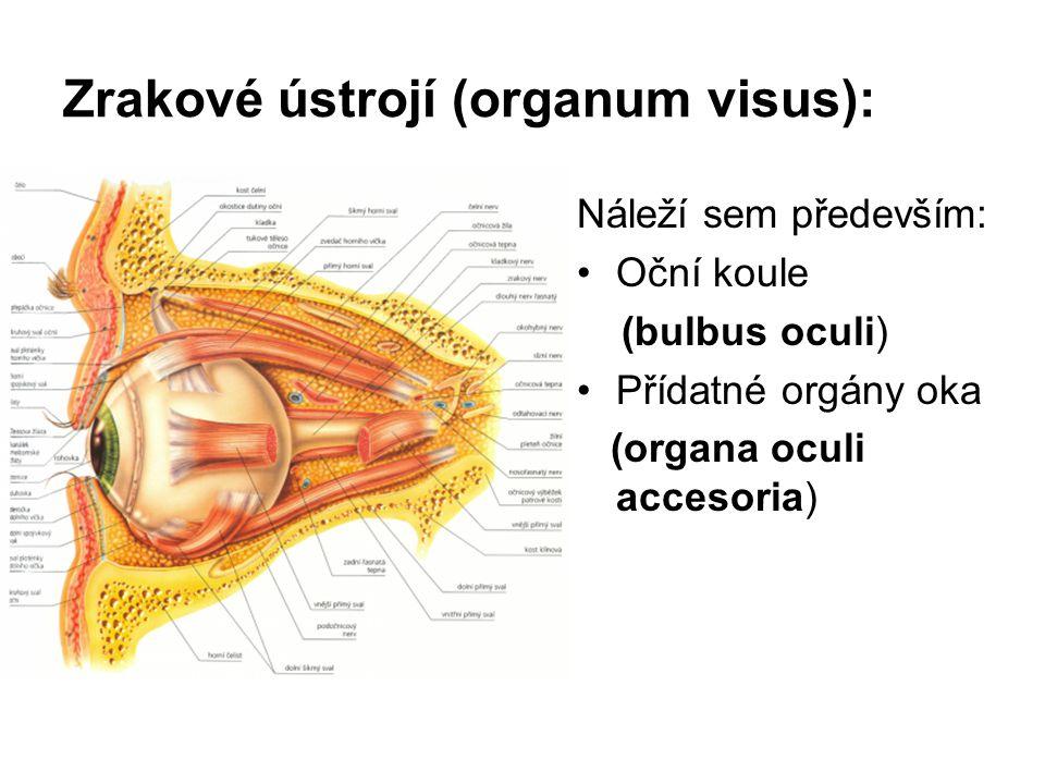 Zrakové ústrojí (organum visus): Náleží sem především: Oční koule (bulbus oculi) Přídatné orgány oka (organa oculi accesoria)