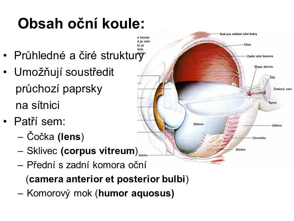 Obsah oční koule: Průhledné a čiré struktury Umožňují soustředit průchozí paprsky na sítnici Patří sem: –Čočka (lens) –Sklivec (corpus vitreum) –Předn