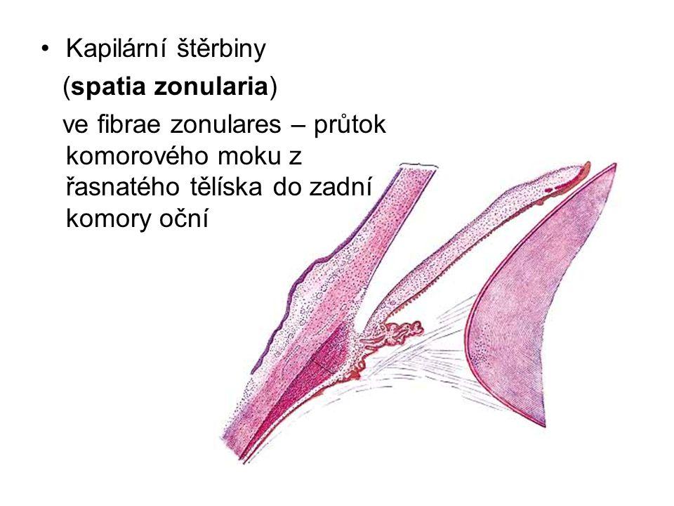 Kapilární štěrbiny (spatia zonularia) ve fibrae zonulares – průtok komorového moku z řasnatého tělíska do zadní komory oční