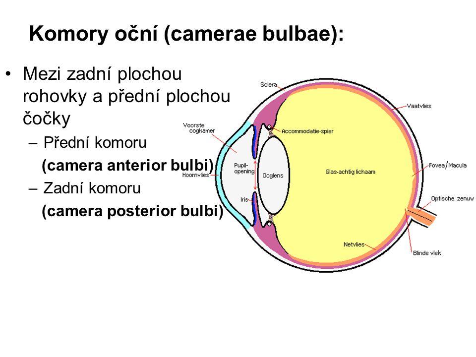 Komory oční (camerae bulbae): Mezi zadní plochou rohovky a přední plochou čočky –Přední komoru (camera anterior bulbi) –Zadní komoru (camera posterior