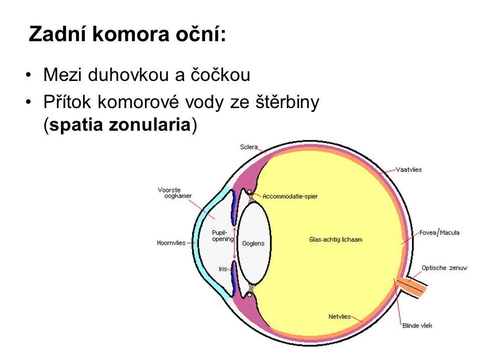 Zadní komora oční: Mezi duhovkou a čočkou Přítok komorové vody ze štěrbiny (spatia zonularia)