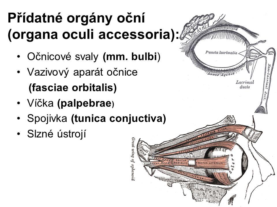 Přídatné orgány oční (organa oculi accessoria): Očnicové svaly (mm. bulbi) Vazivový aparát očnice (fasciae orbitalis) Víčka (palpebrae ) Spojivka (tun