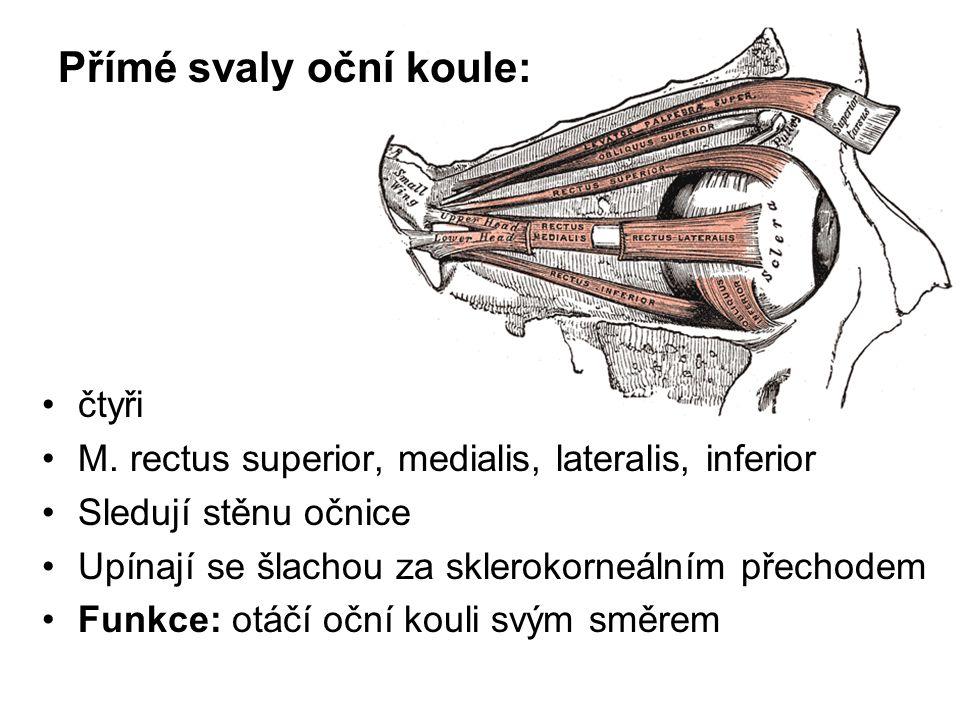 Přímé svaly oční koule: čtyři M. rectus superior, medialis, lateralis, inferior Sledují stěnu očnice Upínají se šlachou za sklerokorneálním přechodem