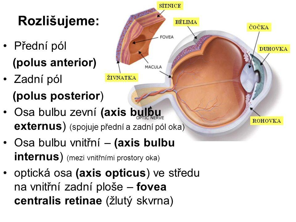 Rozlišujeme: Přední pól (polus anterior) Zadní pól (polus posterior) Osa bulbu zevní (axis bulbu externus) (spojuje přední a zadní pól oka) Osa bulbu