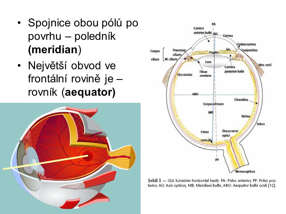 Spojnice obou pólů po povrhu – poledník (meridian) Největší obvod ve frontální rovině je – rovník (aequator)