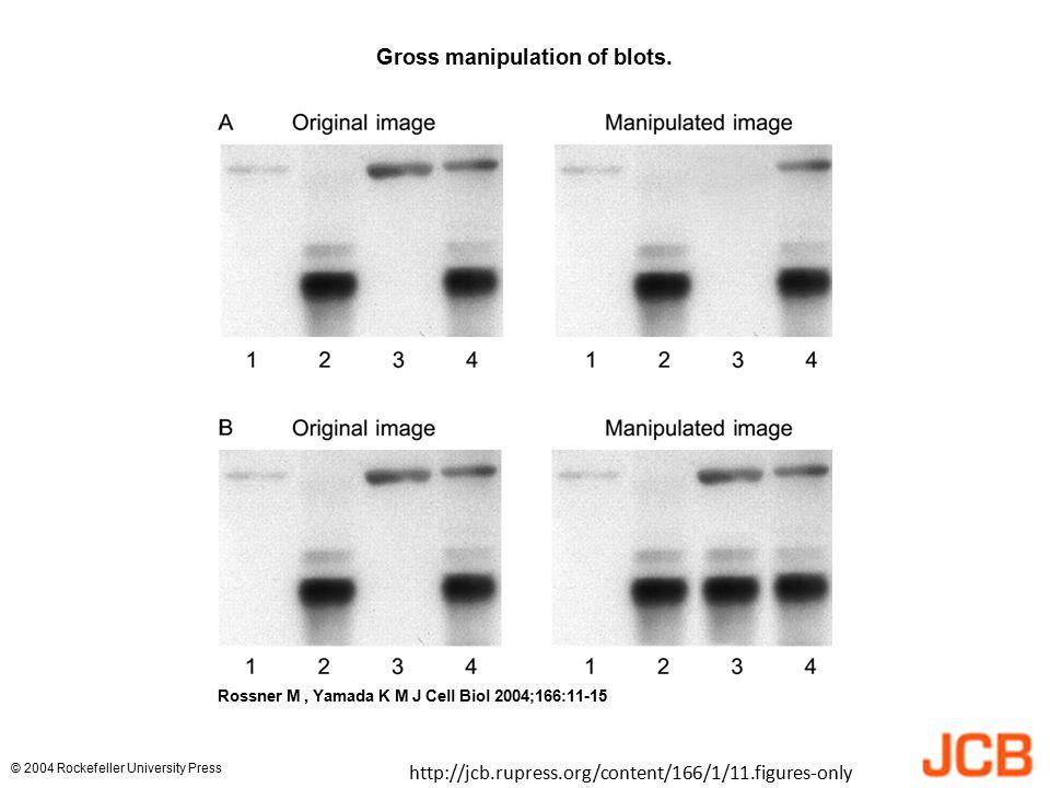 Gross manipulation of blots. Rossner M, Yamada K M J Cell Biol 2004;166:11-15 © 2004 Rockefeller University Press http://jcb.rupress.org/content/166/1