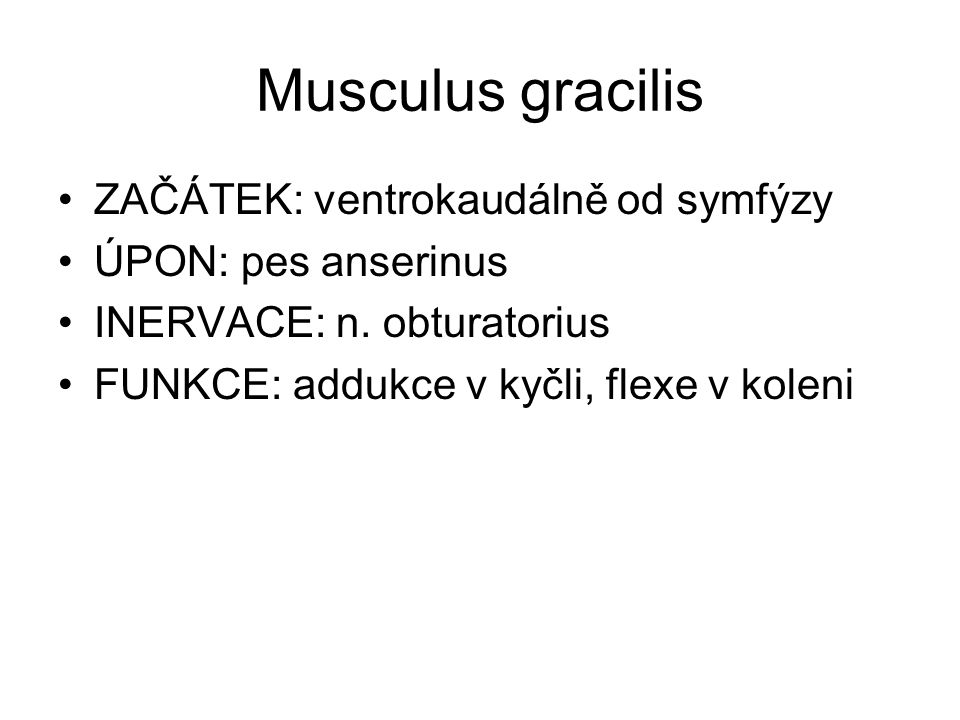 Musculus gracilis ZAČÁTEK: ventrokaudálně od symfýzy ÚPON: pes anserinus INERVACE: n. obturatorius FUNKCE: addukce v kyčli, flexe v koleni