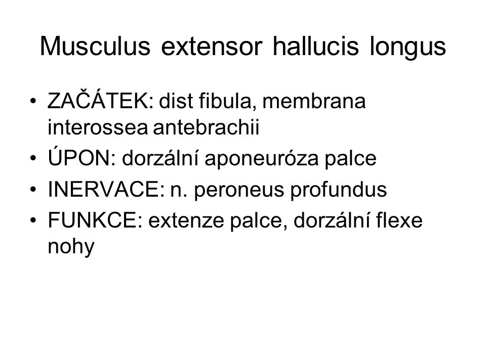 Musculus extensor hallucis longus ZAČÁTEK: dist fibula, membrana interossea antebrachii ÚPON: dorzální aponeuróza palce INERVACE: n. peroneus profundu