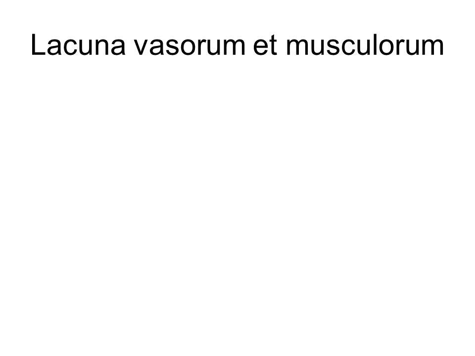 Lacuna vasorum et musculorum