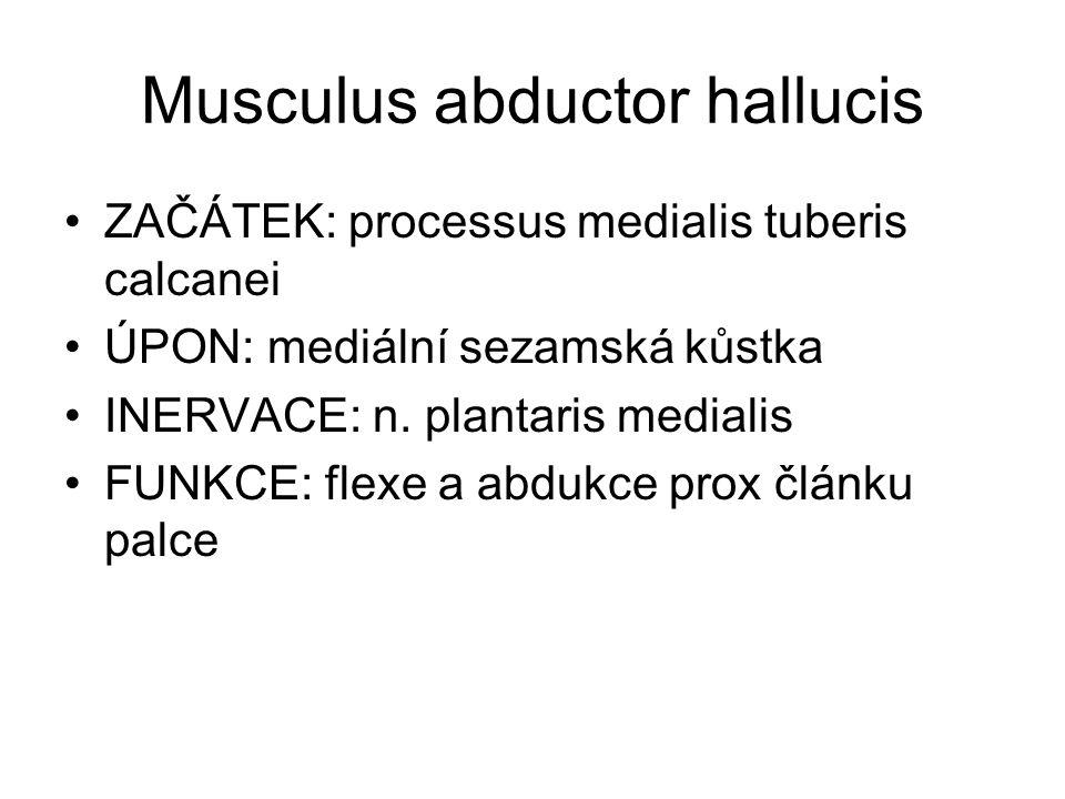 Musculus abductor hallucis ZAČÁTEK: processus medialis tuberis calcanei ÚPON: mediální sezamská kůstka INERVACE: n. plantaris medialis FUNKCE: flexe a