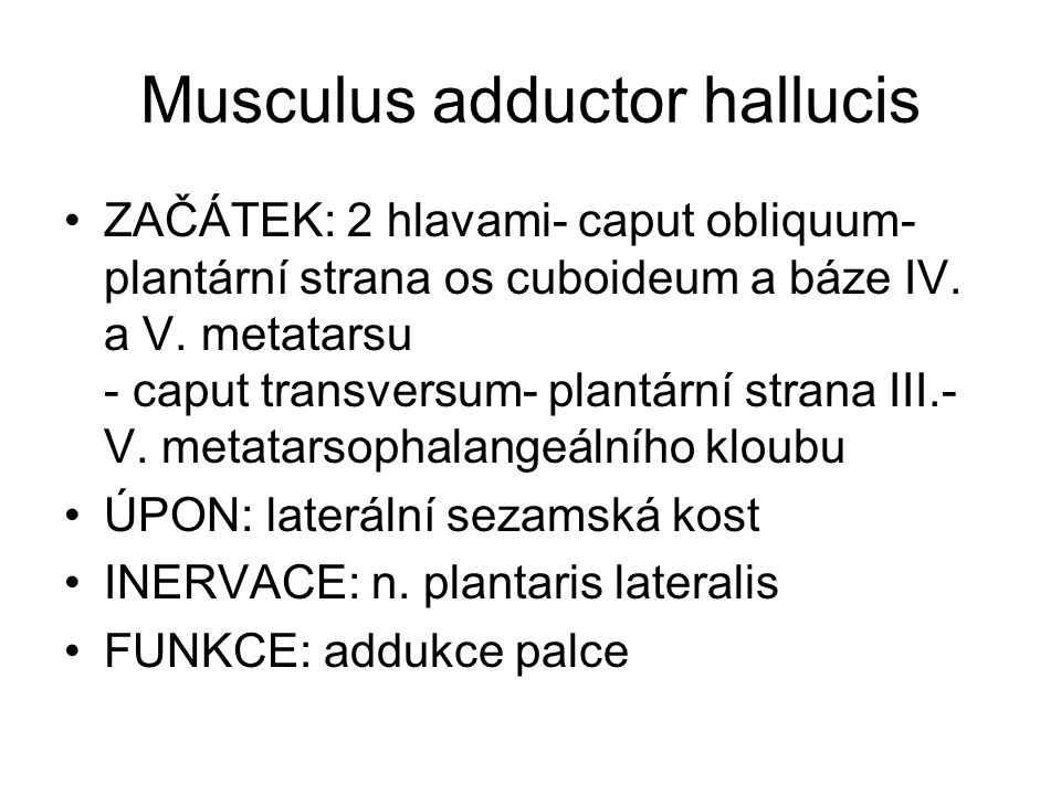 Musculus adductor hallucis ZAČÁTEK: 2 hlavami- caput obliquum- plantární strana os cuboideum a báze IV.