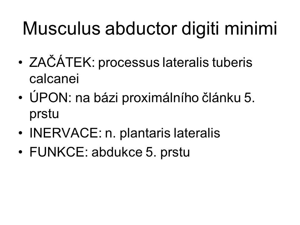 Musculus abductor digiti minimi ZAČÁTEK: processus lateralis tuberis calcanei ÚPON: na bázi proximálního článku 5. prstu INERVACE: n. plantaris latera