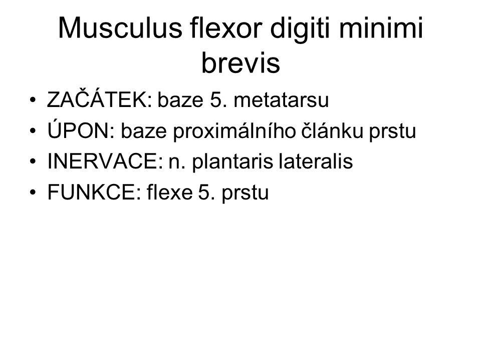 Musculus flexor digiti minimi brevis ZAČÁTEK: baze 5. metatarsu ÚPON: baze proximálního článku prstu INERVACE: n. plantaris lateralis FUNKCE: flexe 5.