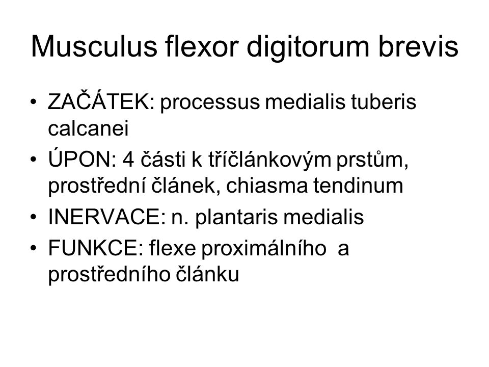 Musculus flexor digitorum brevis ZAČÁTEK: processus medialis tuberis calcanei ÚPON: 4 části k tříčlánkovým prstům, prostřední článek, chiasma tendinum INERVACE: n.