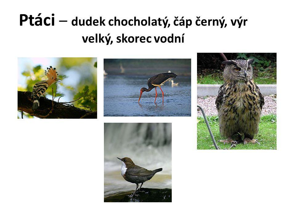 Ptáci – dudek chocholatý, čáp černý, výr velký, skorec vodní