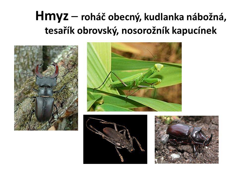 Hmyz – roháč obecný, kudlanka nábožná, tesařík obrovský, nosorožník kapucínek