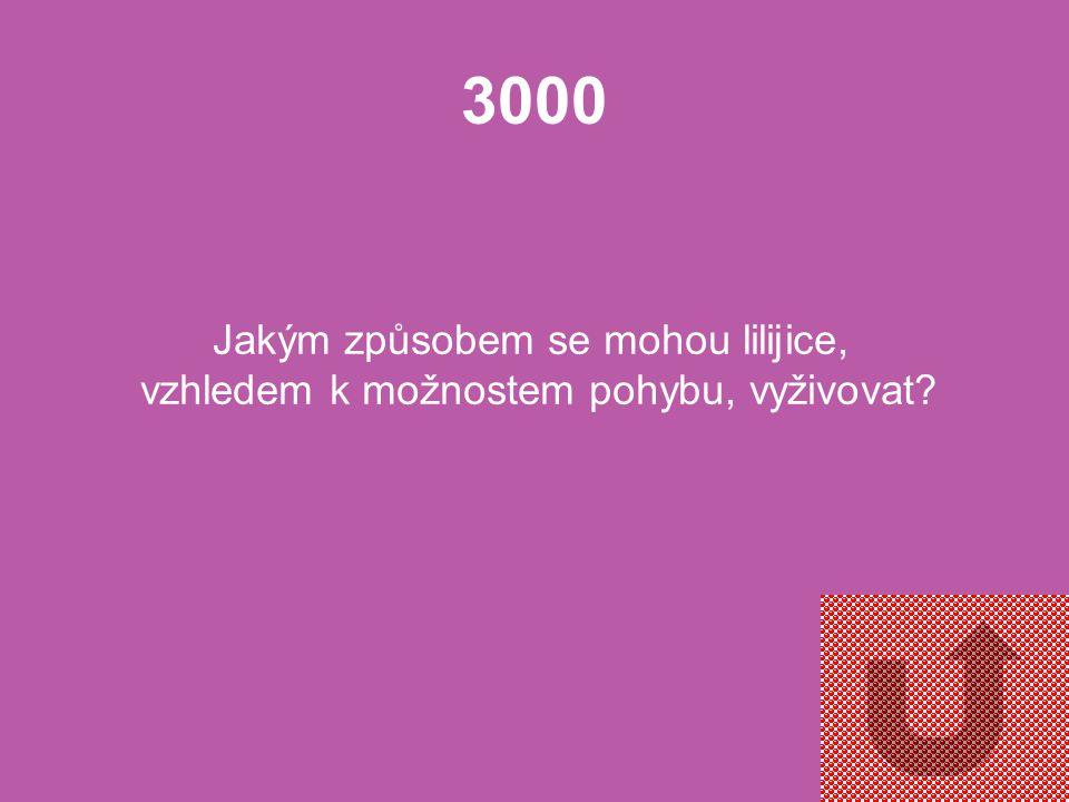 2000 Podle čeho dostaly lilijice svůj název a proč