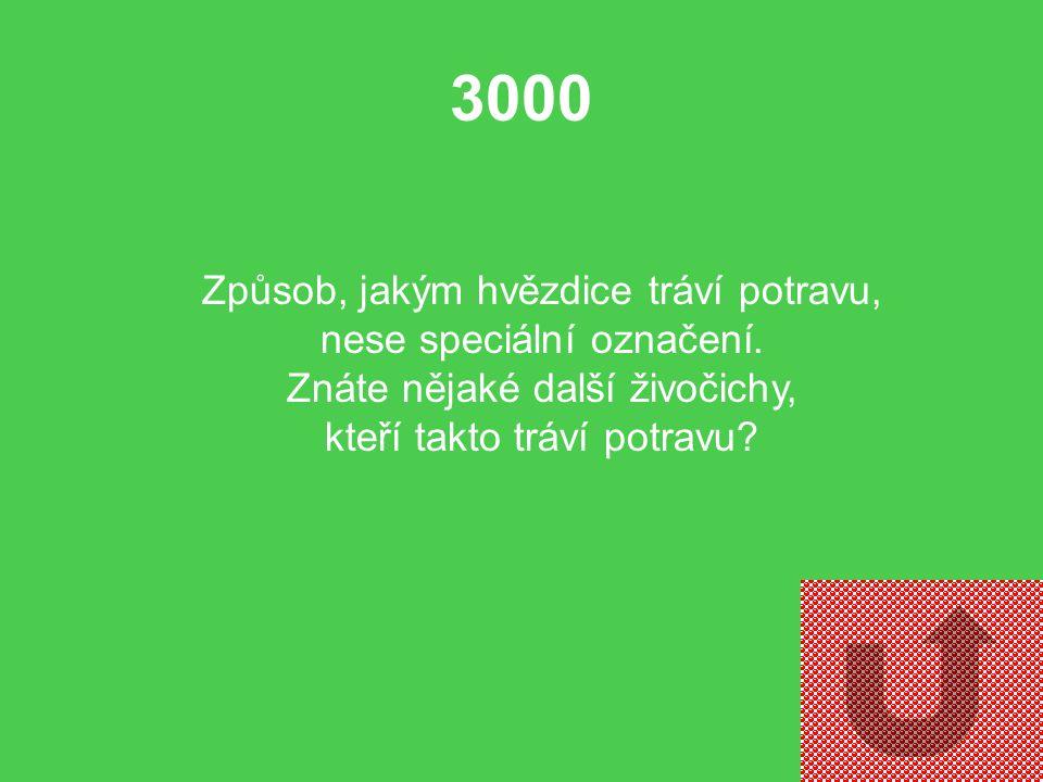 2000 Jak snadno morfologicky odlišíme hvězdice a hadice