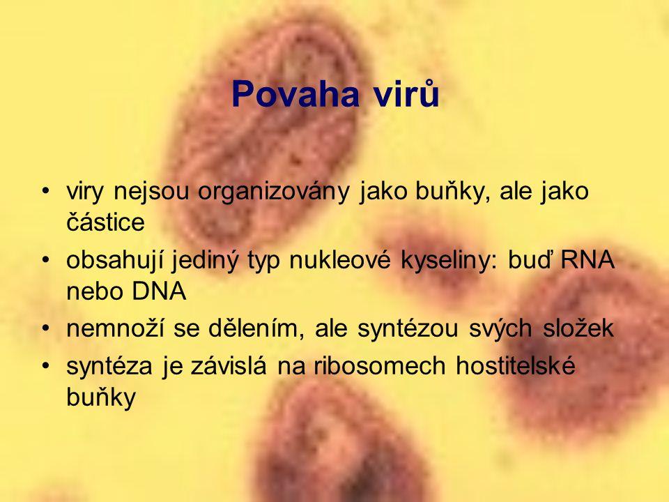 Povaha virů viry nejsou organizovány jako buňky, ale jako částice obsahují jediný typ nukleové kyseliny: buď RNA nebo DNA nemnoží se dělením, ale synt