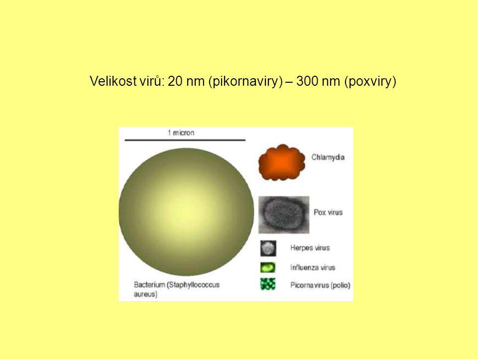 Stavba virionu virion = virová částice -vnitřní část – dřeň neboli nukleoid obsahuje nukleovou kyselinu -zevní část – kapsida obsahuje bílkovinu nukleoid + kapsida = nukleokapsida (neobalené viry, např.