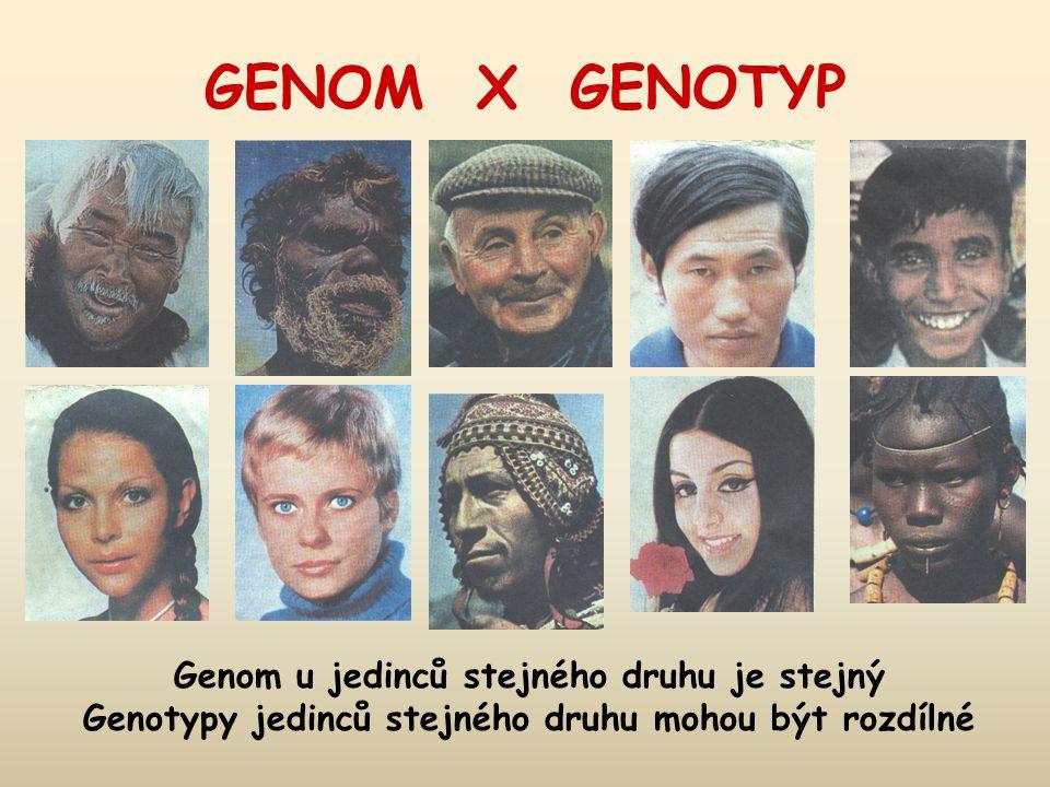 Genom u jedinců stejného druhu je stejný Genotypy jedinců stejného druhu mohou být rozdílné GENOM X GENOTYP