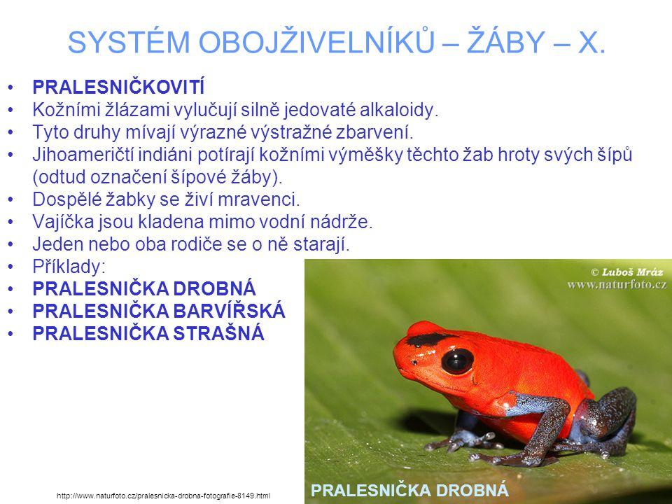 SYSTÉM OBOJŽIVELNÍKŮ – ŽÁBY – X.PRALESNIČKA DROBNÁ –Dorůstá do 2 – 2,5 cm.