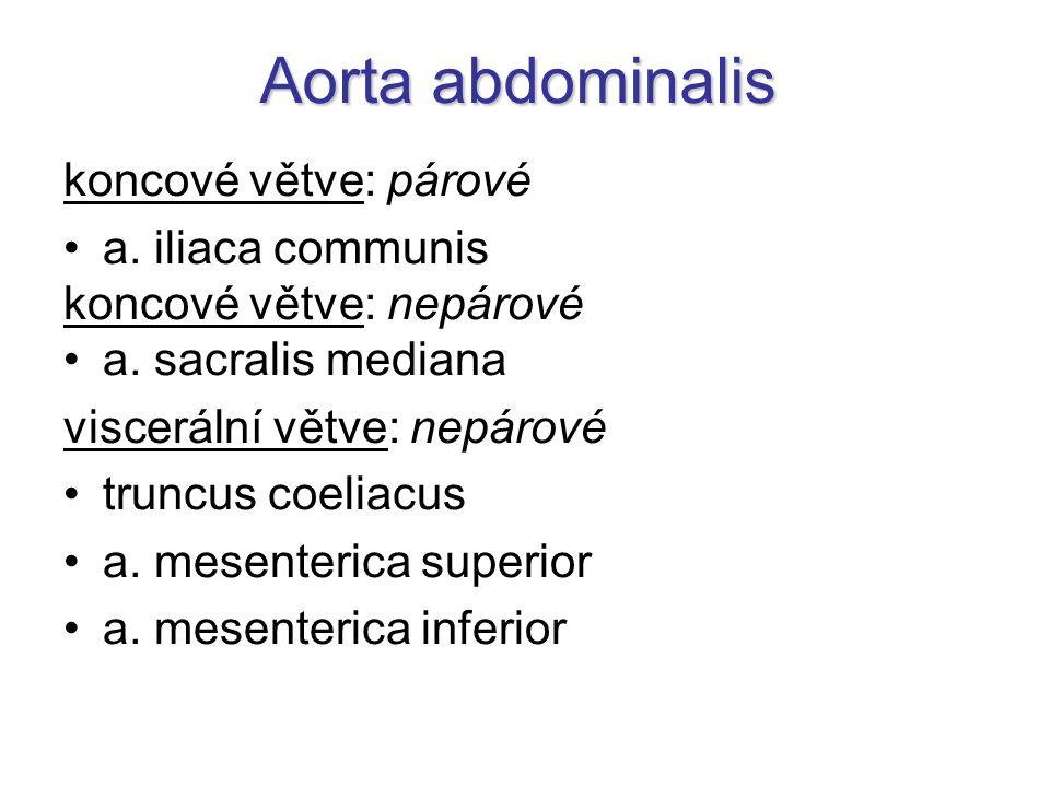 Aorta abdominalis koncové větve: párové a. iliaca communis koncové větve: nepárové a. sacralis mediana viscerální větve: nepárové truncus coeliacus a.
