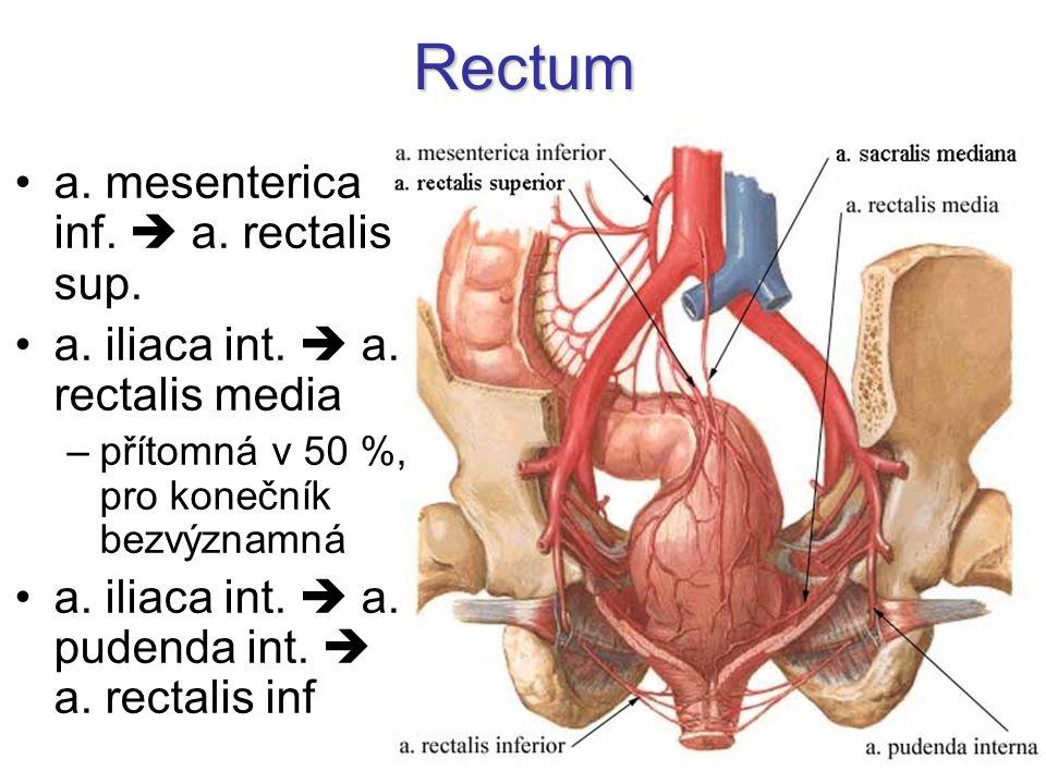 Rectum a. mesenterica inf.  a. rectalis sup. a. iliaca int.  a. rectalis media –přítomná v 50 %, pro konečník bezvýznamná a. iliaca int.  a. pudend