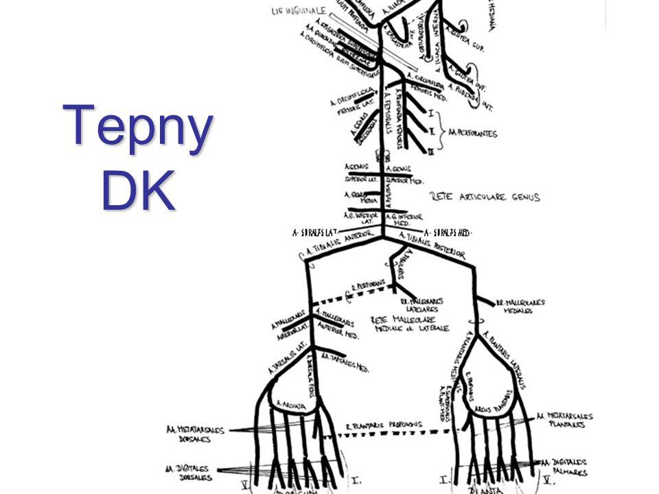 Tepny DK