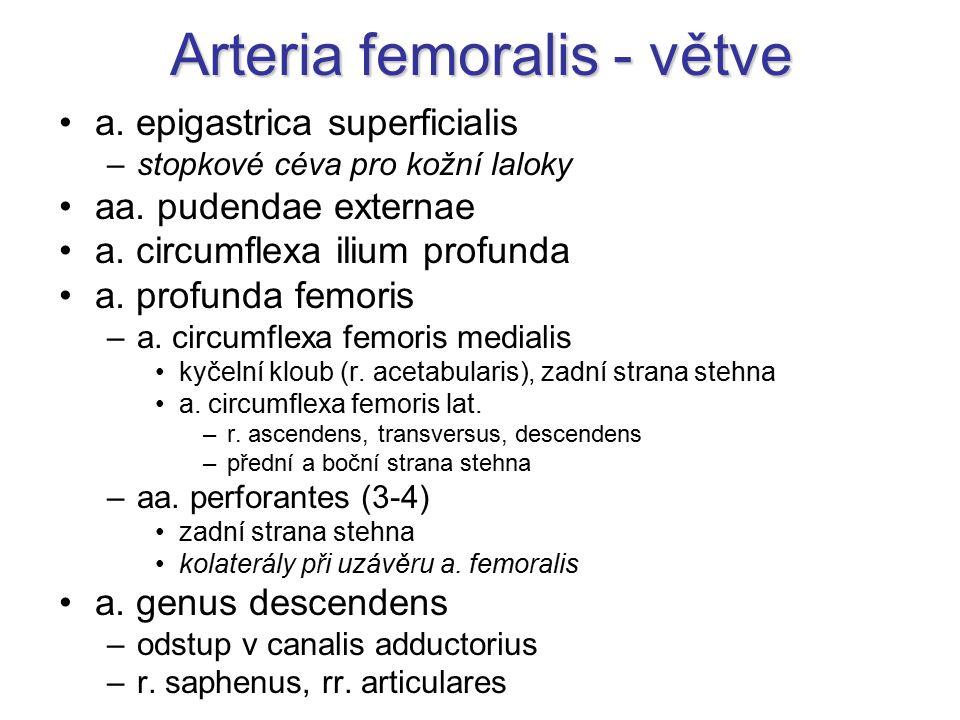 Arteria femoralis - větve a. epigastrica superficialis –stopkové céva pro kožní laloky aa. pudendae externae a. circumflexa ilium profunda a. profunda