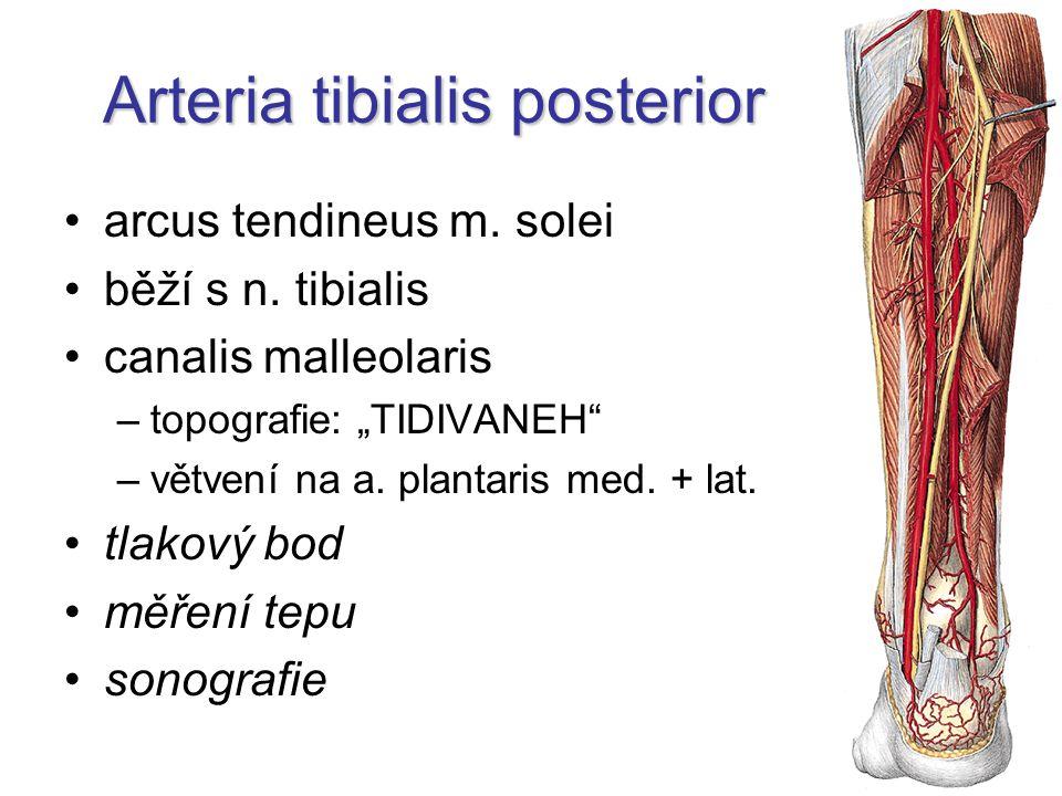 "Arteria tibialis posterior arcus tendineus m. solei běží s n. tibialis canalis malleolaris –topografie: ""TIDIVANEH"" –větvení na a. plantaris med. + la"